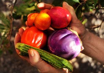 Se volete donare una spesa bio a chi ha bisogno, Parsec Agri Cultura e Zolle la consegnano a domicilio